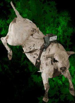 Wilfong Bucking Bulls